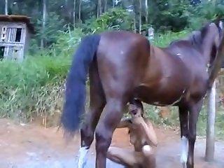 Horse And Boy Xxx